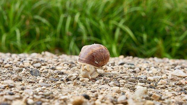 snail-5313346_640 (1)